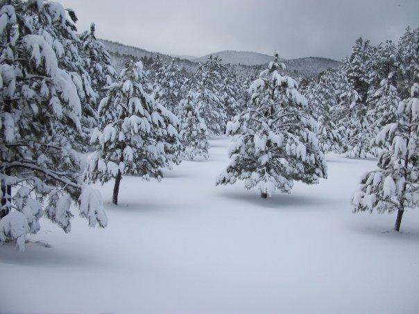 snow_day_10